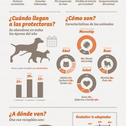 infografia-estudio-abandono-adopcion-2014